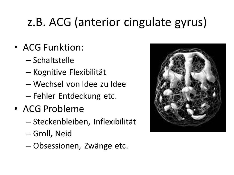 z.B. ACG (anterior cingulate gyrus)