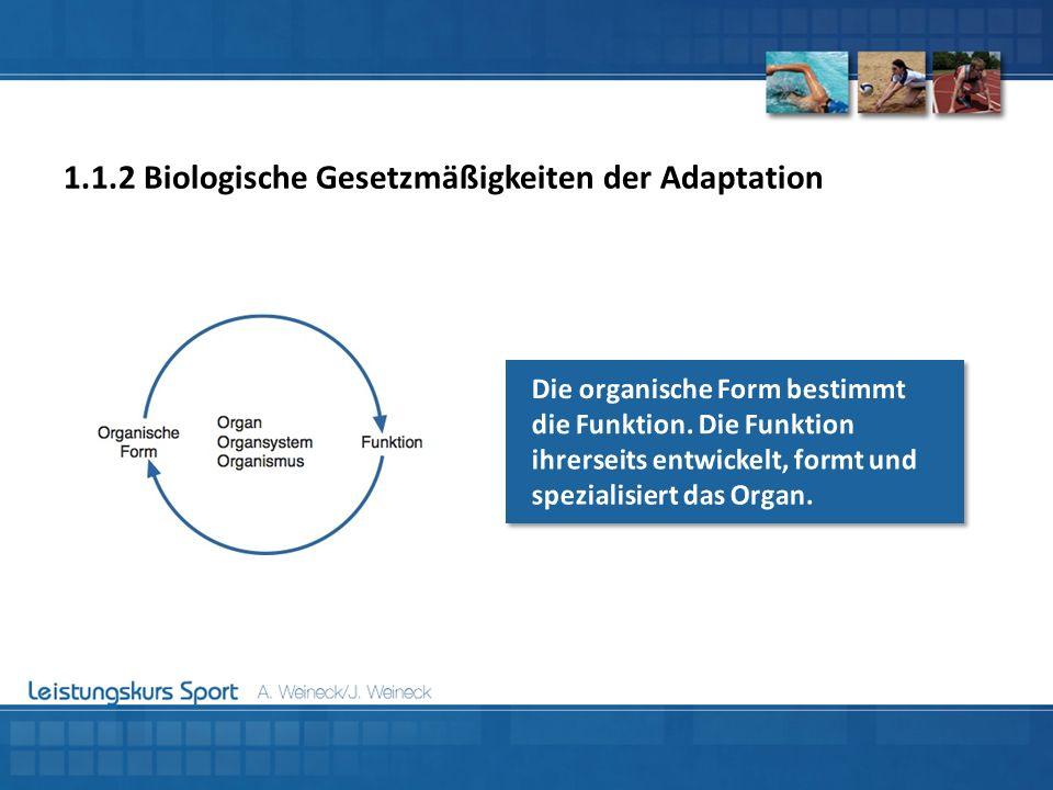 1.1.2 Biologische Gesetzmäßigkeiten der Adaptation