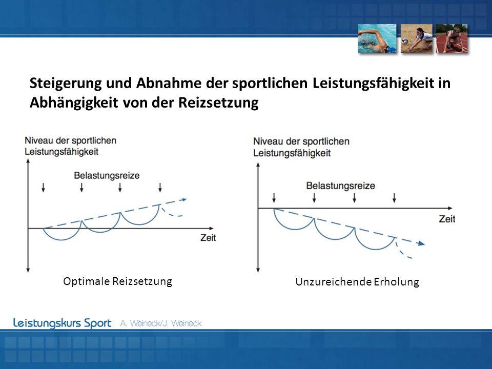 Steigerung und Abnahme der sportlichen Leistungsfähigkeit in Abhängigkeit von der Reizsetzung