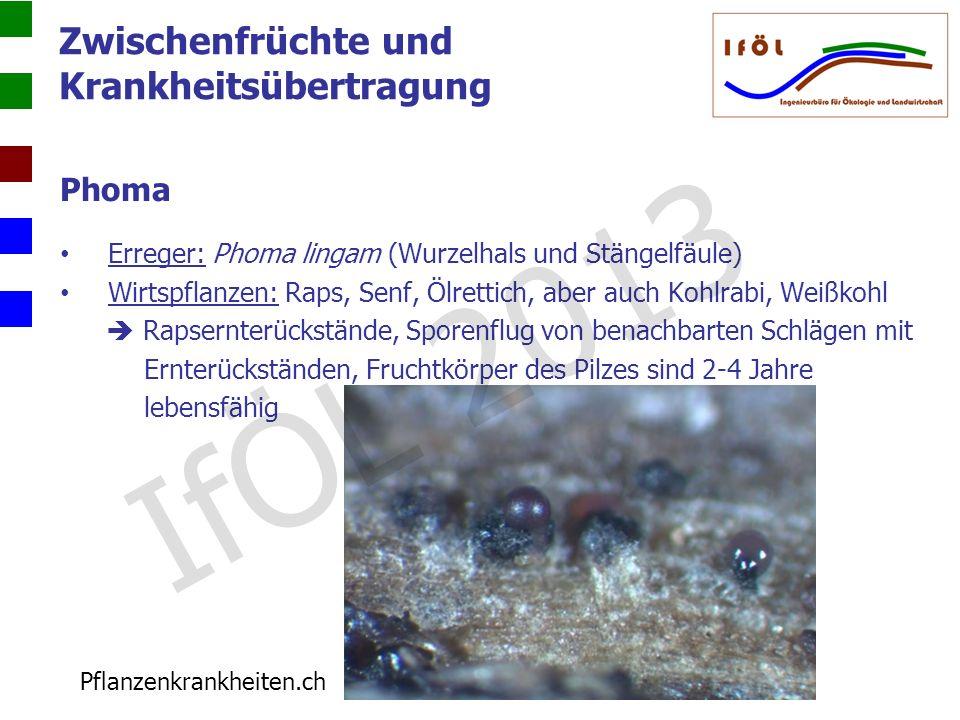 IfÖL 2013 Zwischenfrüchte und Krankheitsübertragung Phoma