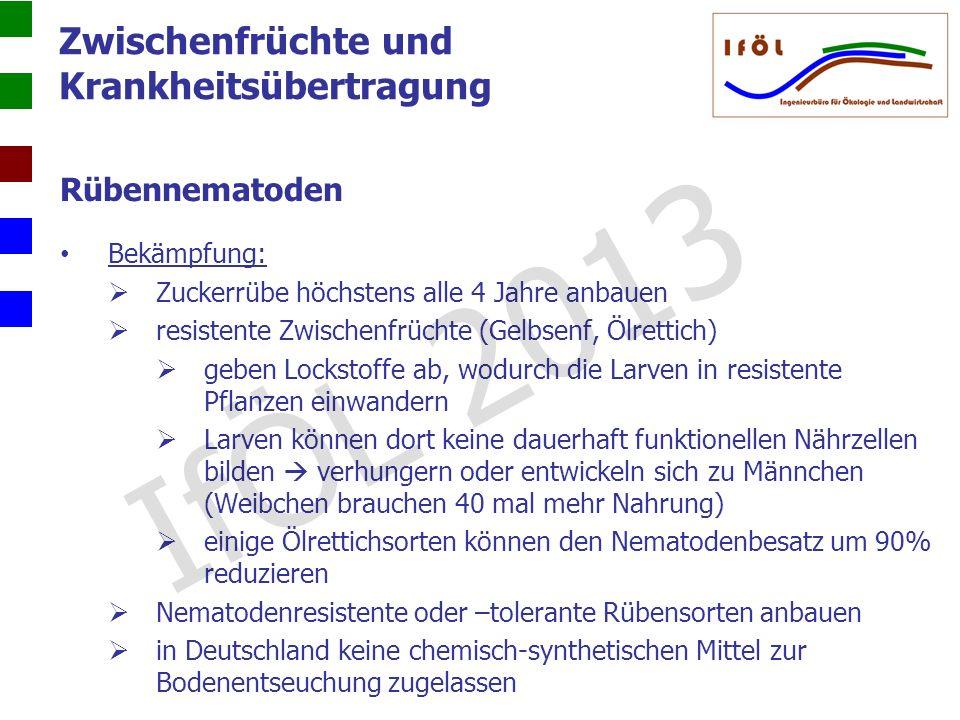 IfÖL 2013 Zwischenfrüchte und Krankheitsübertragung Rübennematoden