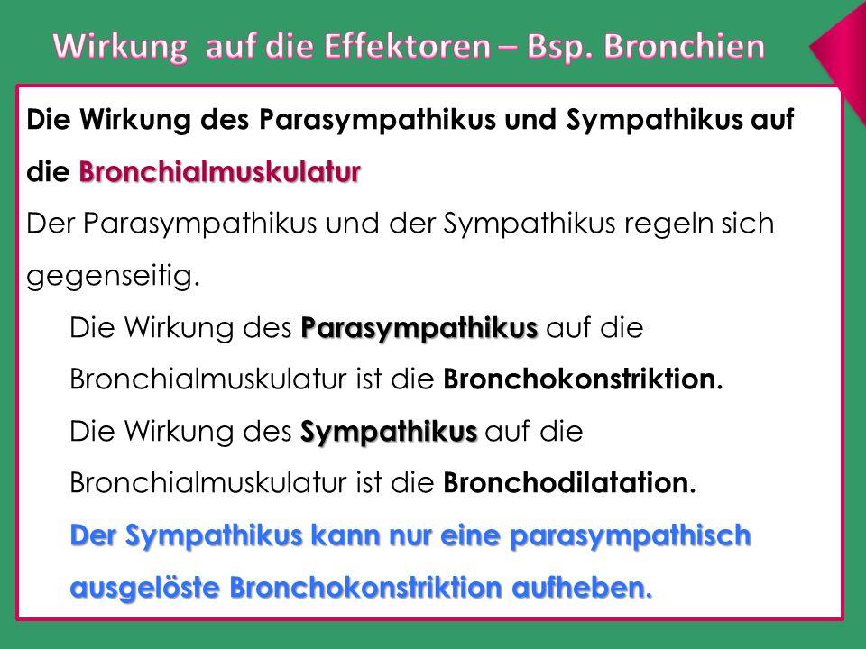 Wirkung auf die Effektoren – Bsp. Bronchien