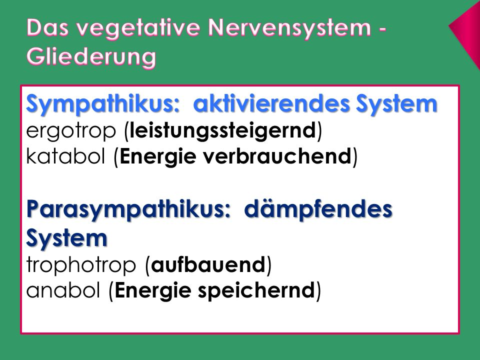 Das vegetative Nervensystem - Gliederung