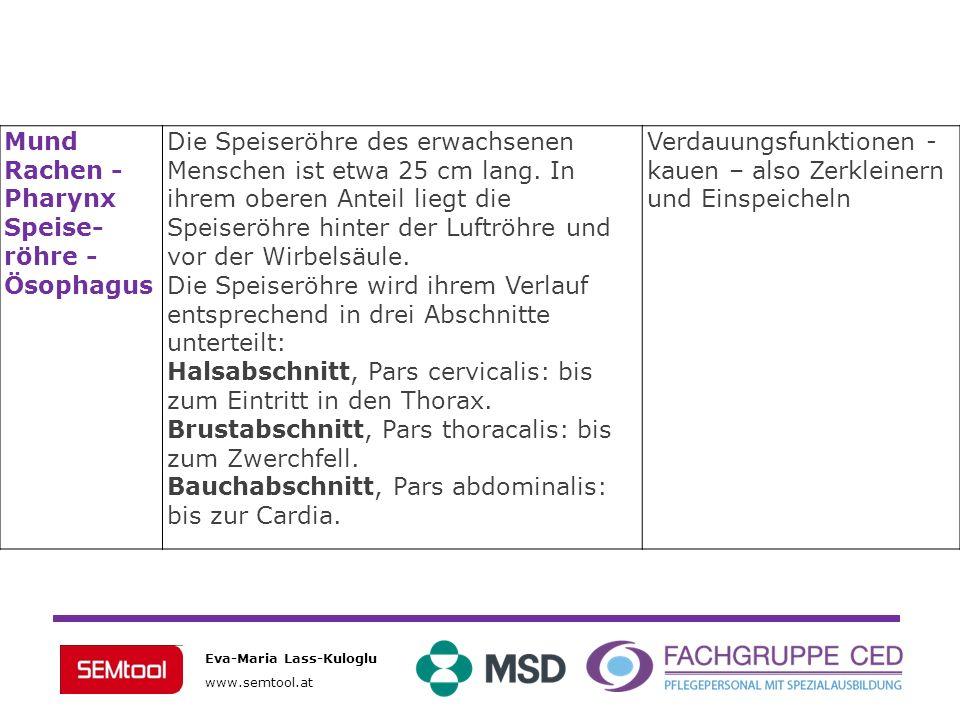 Mund Rachen - Pharynx. Speise-röhre - Ösophagus.