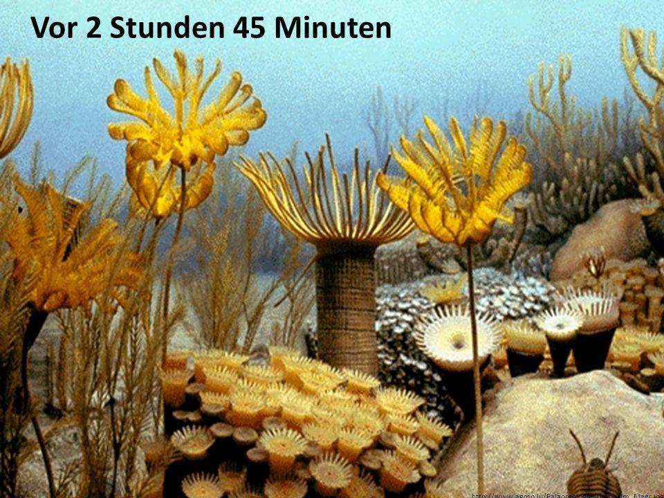 Vor 2 Stunden 45 Minuten http://www.agmp.lu/Palaontologie/Devon/Im_Meer.jpg