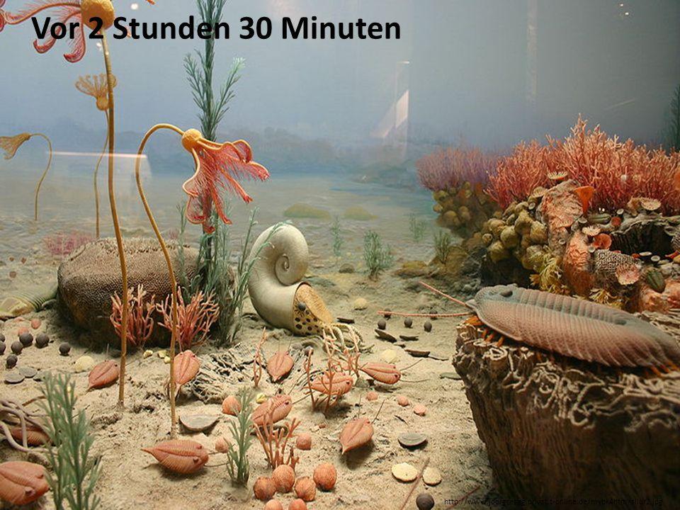 Vor 2 Stunden 30 Minuten http://www.joergresag.privat.t-online.de/mybk4htm/silur2.jpg