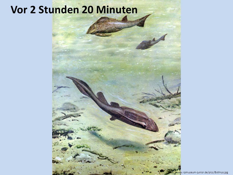 Vor 2 Stunden 20 Minuten http://www.rpmuseum-junior.de/pics/Bothryo.jpg