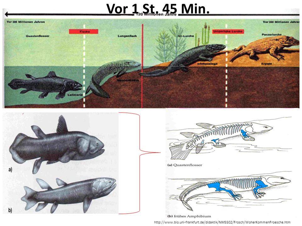 Vor 1 St. 45 Min. Vor 450 Mio Jahre Devon Quastenflosser. Heute noch ca. 200!!!