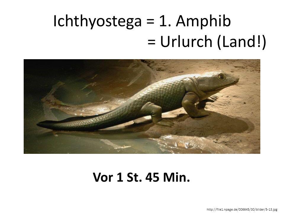Ichthyostega = 1. Amphib = Urlurch (Land!) Vor 1 St. 45 Min.