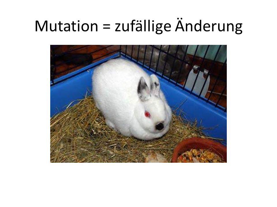 Mutation = zufällige Änderung
