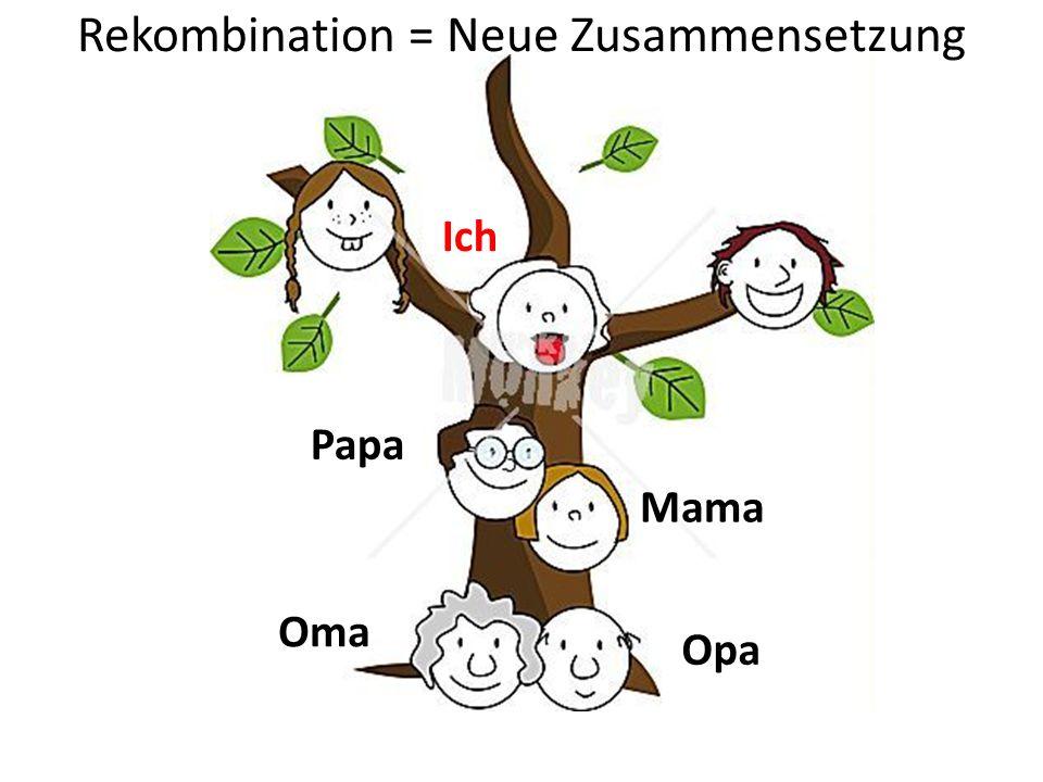 Rekombination = Neue Zusammensetzung