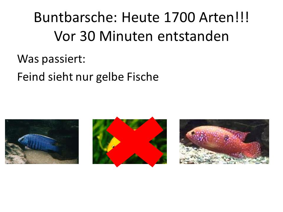 Buntbarsche: Heute 1700 Arten!!! Vor 30 Minuten entstanden