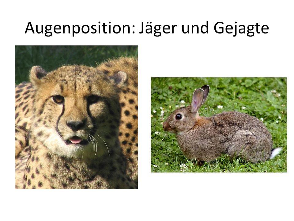 Augenposition: Jäger und Gejagte
