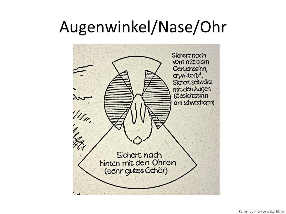 Augenwinkel/Nase/Ohr