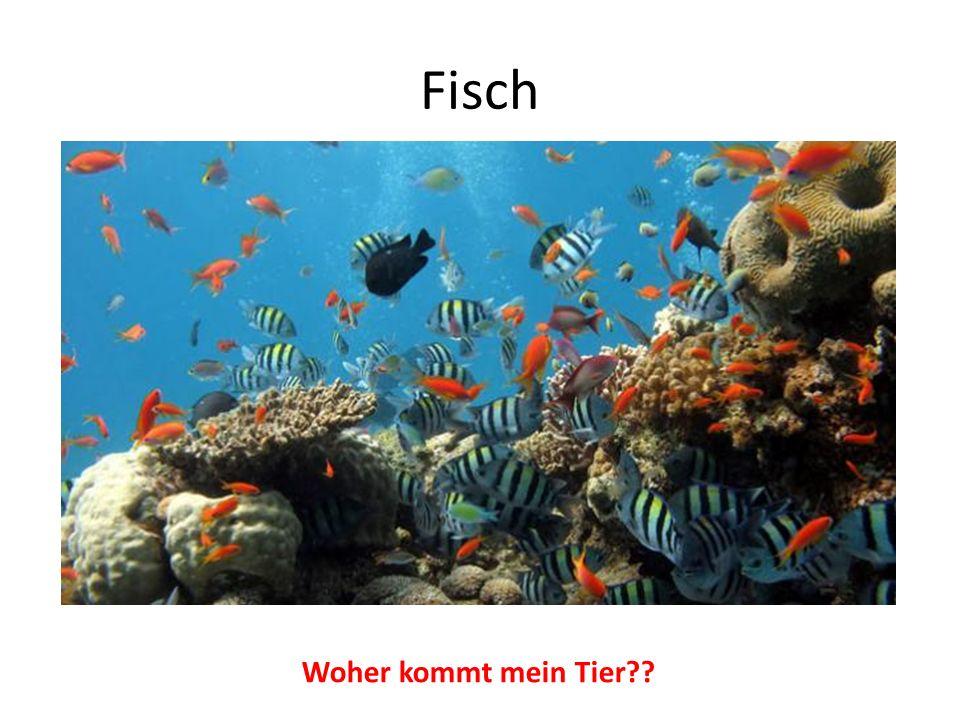 Fisch Woher kommt mein Tier