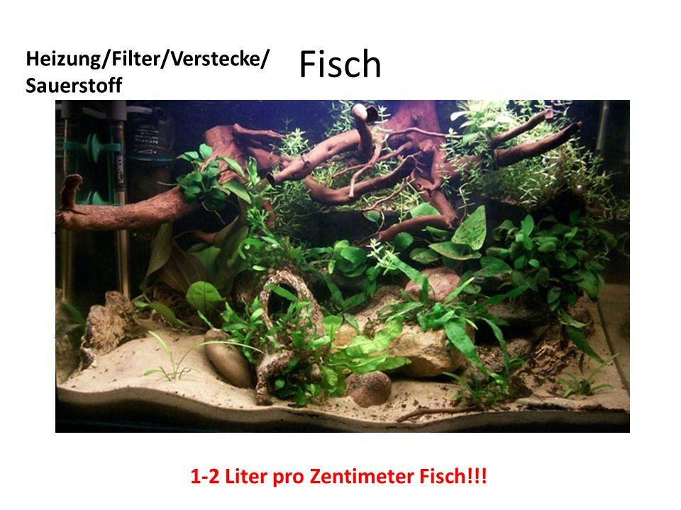 Fisch Heizung/Filter/Verstecke/ Sauerstoff