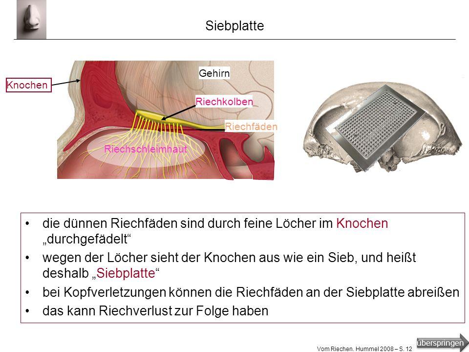 bei Kopfverletzungen können die Riechfäden an der Siebplatte abreißen