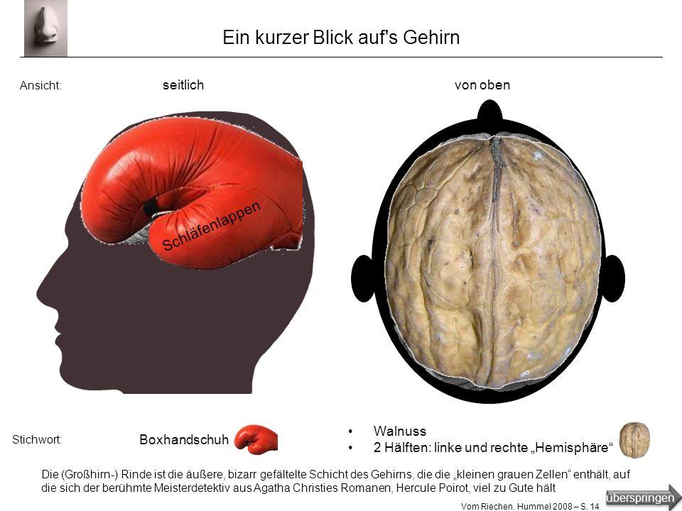 Ein kurzer Blick auf s Gehirn