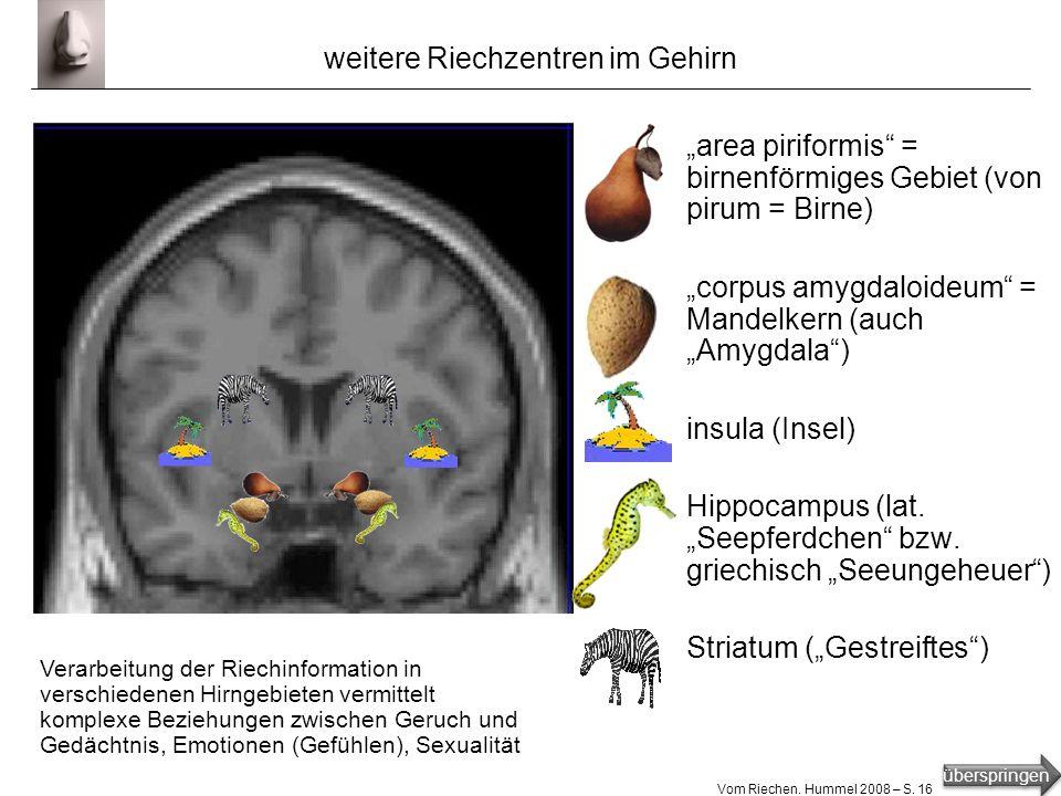 weitere Riechzentren im Gehirn