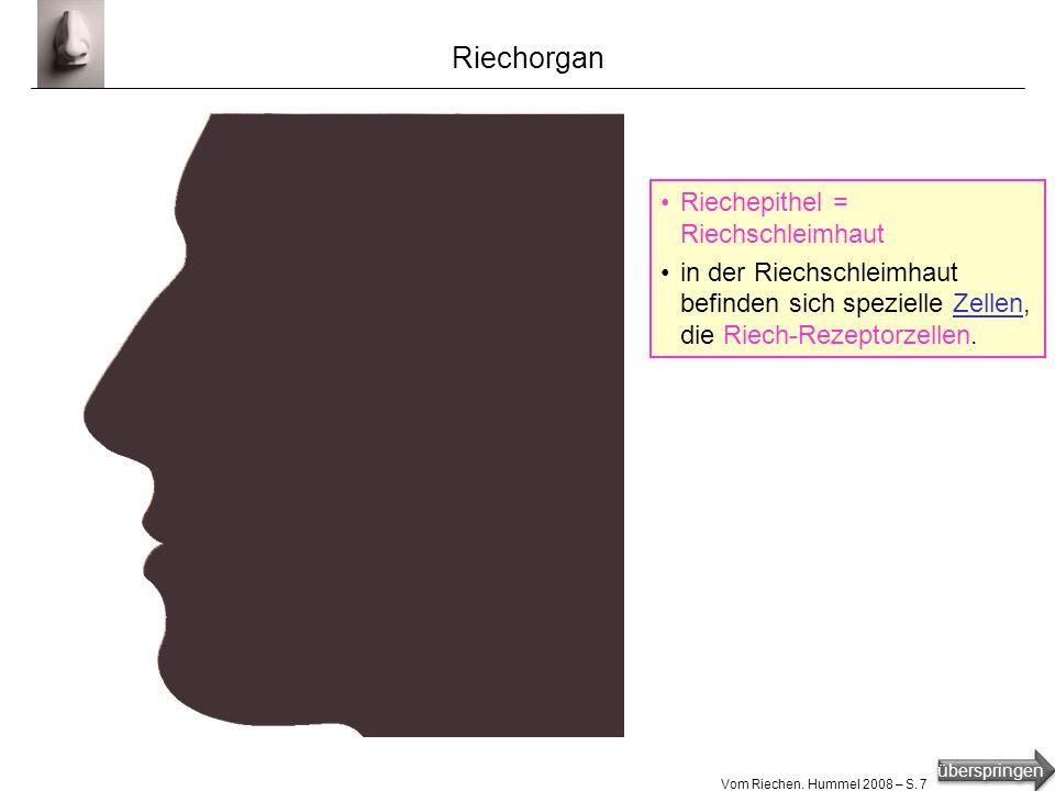 Riechorgan Riechepithel = Riechschleimhaut
