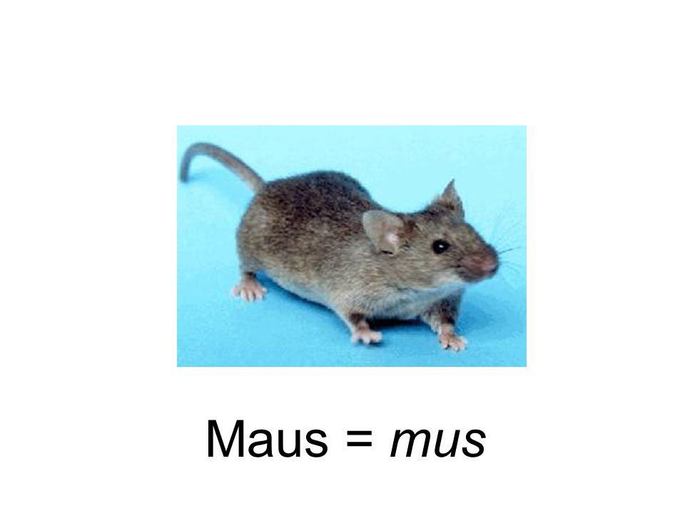 Maus = mus