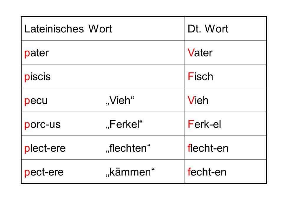 """Lateinisches WortDt. Wort. pater. Vater. piscis. Fisch. pecu. """"Vieh Vieh. porc-us. """"Ferkel Ferk-el."""