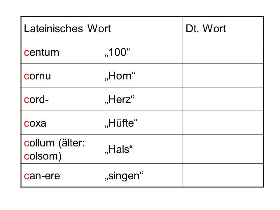 """Lateinisches Wort Dt. Wort. centum. """"100 cornu. """"Horn cord- """"Herz coxa. """"Hüfte collum (älter: colsom)"""
