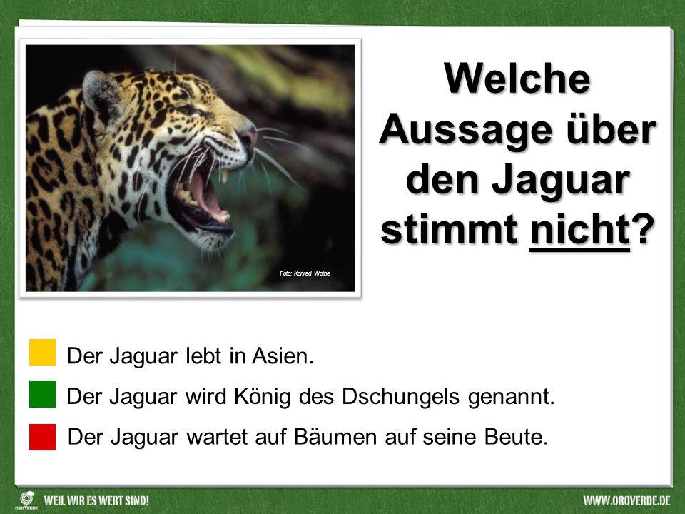 Welche Aussage über den Jaguar stimmt nicht