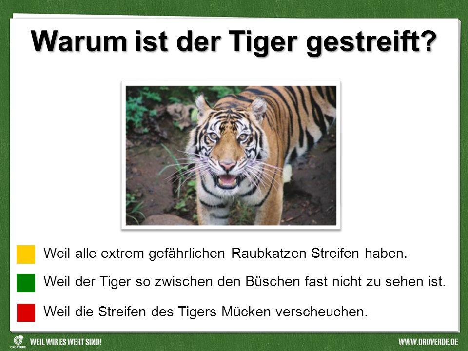Warum ist der Tiger gestreift