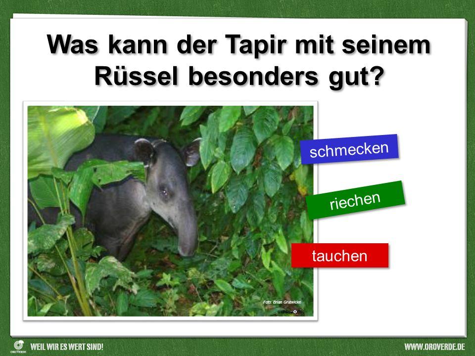 Was kann der Tapir mit seinem Rüssel besonders gut