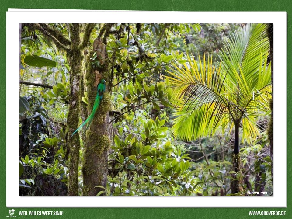 Foto: Quetzal (Konrad Wothe)