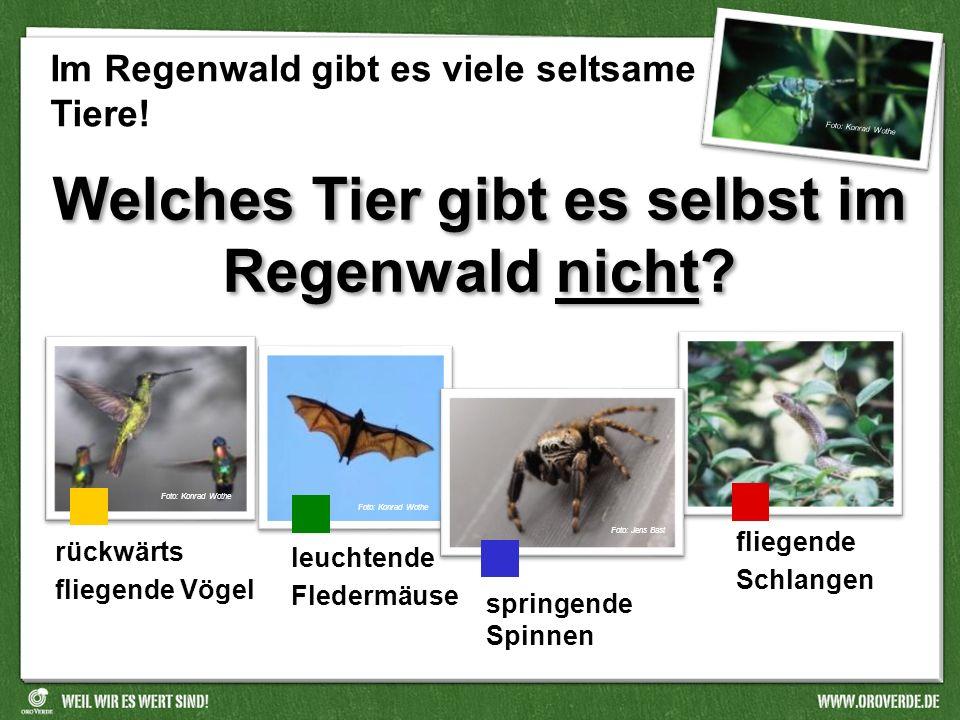 Welches Tier gibt es selbst im Regenwald nicht