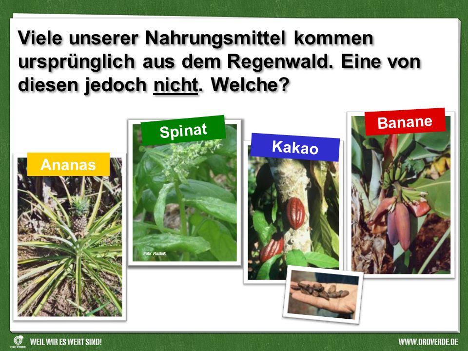 Viele unserer Nahrungsmittel kommen ursprünglich aus dem Regenwald
