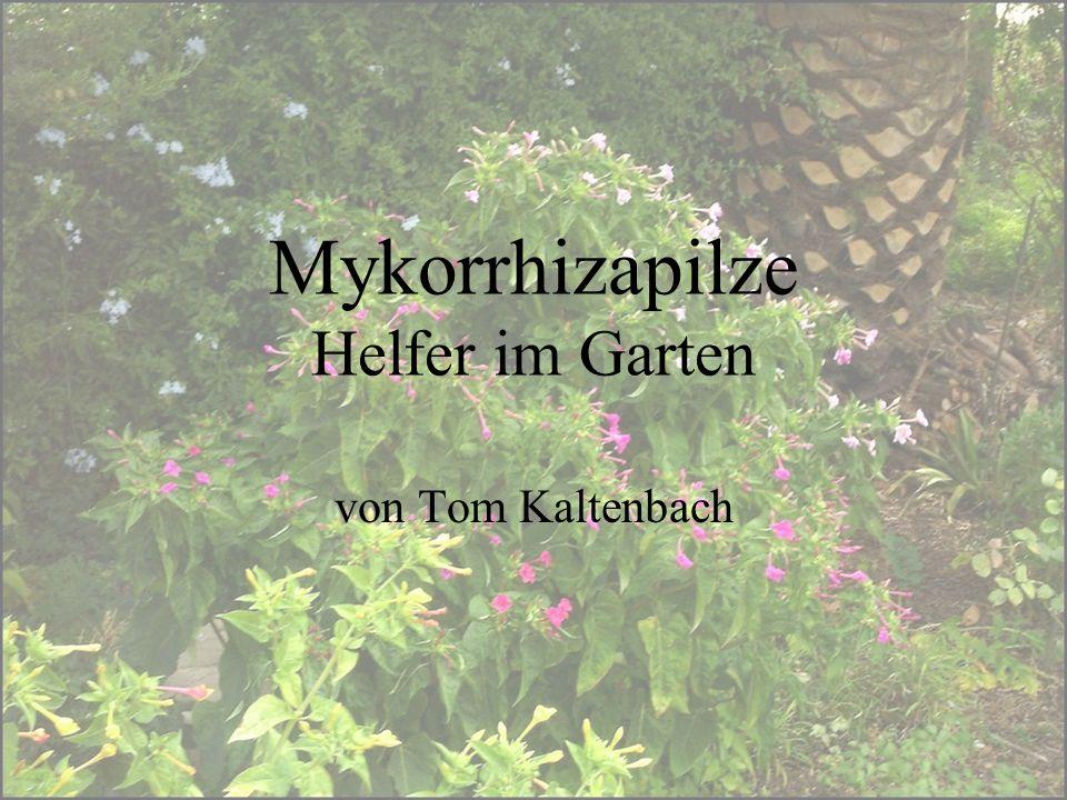 Mykorrhizapilze Helfer im Garten