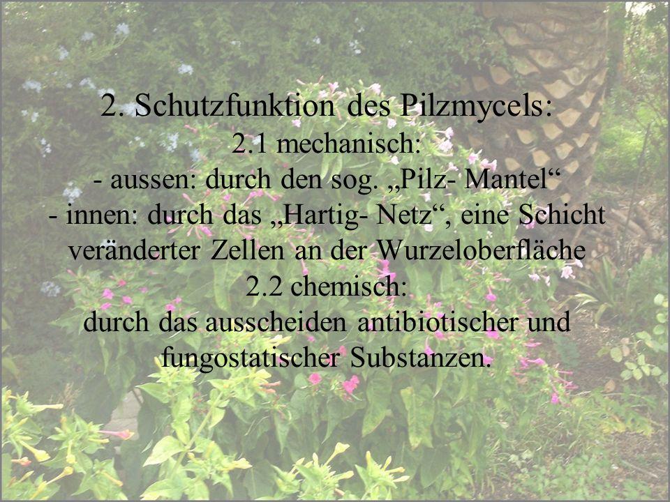 2. Schutzfunktion des Pilzmycels: 2