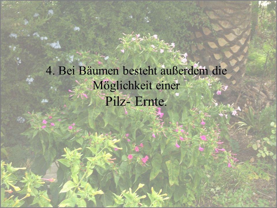 4. Bei Bäumen besteht außerdem die Möglichkeit einer Pilz- Ernte.