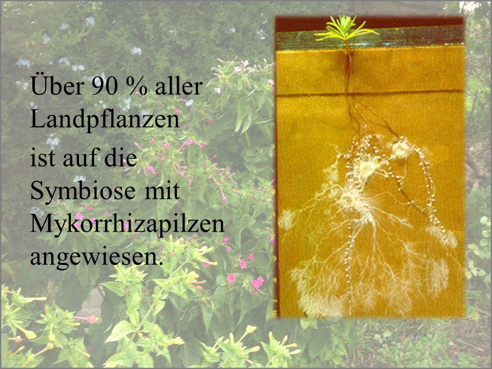 Über 90 % aller Landpflanzen