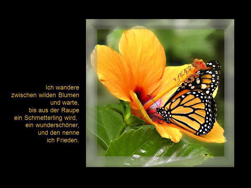 Ich wandere zwischen wilden Blumen. und warte, bis aus der Raupe. ein Schmetterling wird, ein wunderschöner,