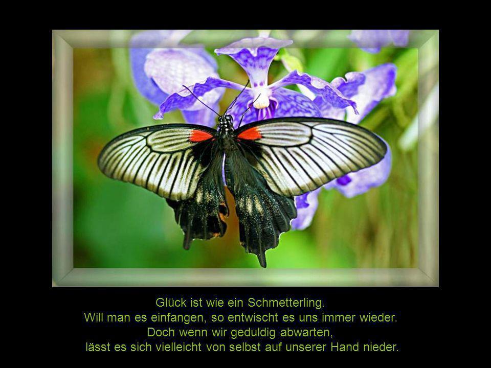Glück ist wie ein Schmetterling.