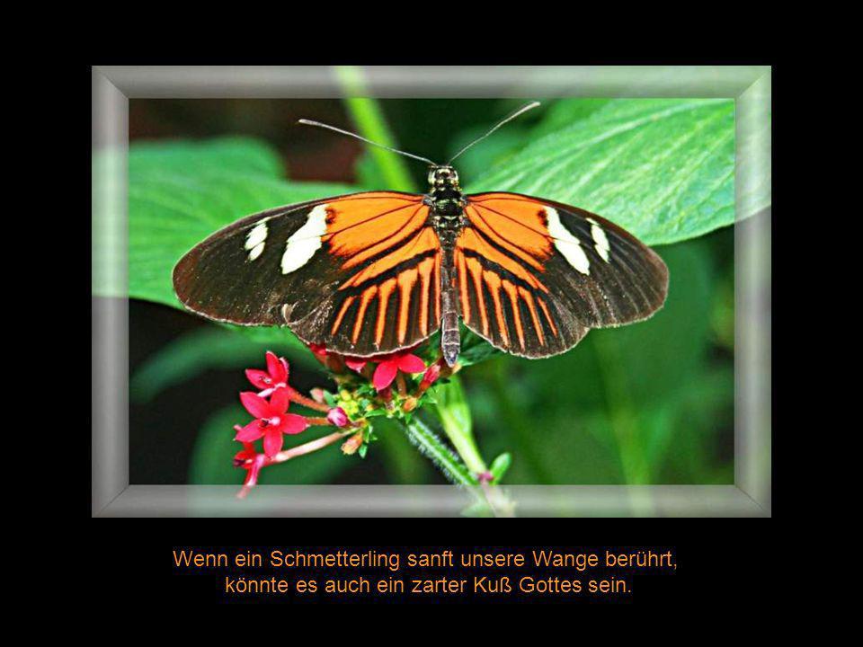 Wenn ein Schmetterling sanft unsere Wange berührt,