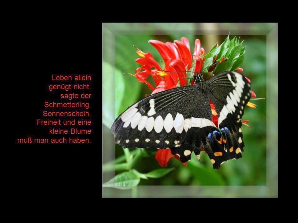 Leben allein genügt nicht, sagte der. Schmetterling, Sonnenschein, Freiheit und eine. kleine Blume.