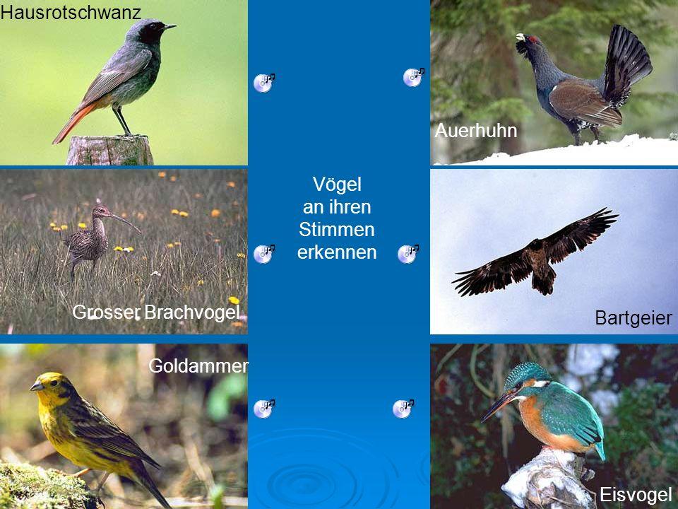 Hausrotschwanz Auerhuhn. Vögel. an ihren. Stimmen. erkennen. Grosser Brachvogel. Bartgeier. Goldammer.