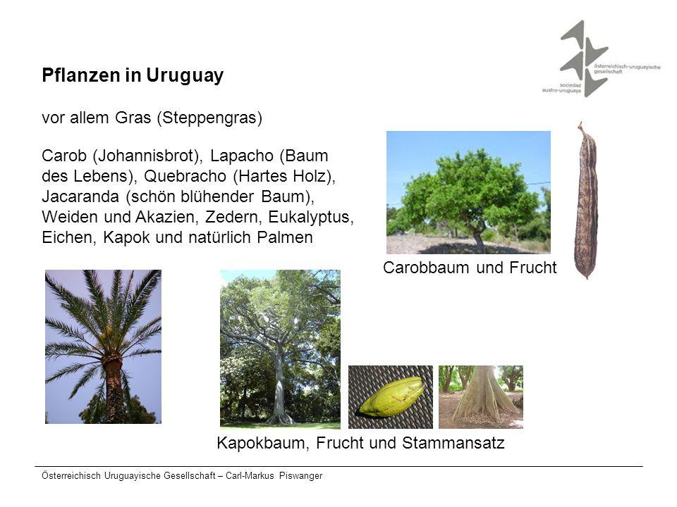 Pflanzen in Uruguay vor allem Gras (Steppengras)