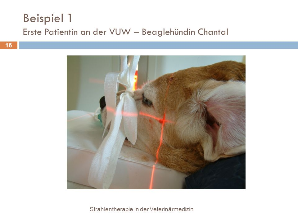 Beispiel 1 Erste Patientin an der VUW – Beaglehündin Chantal