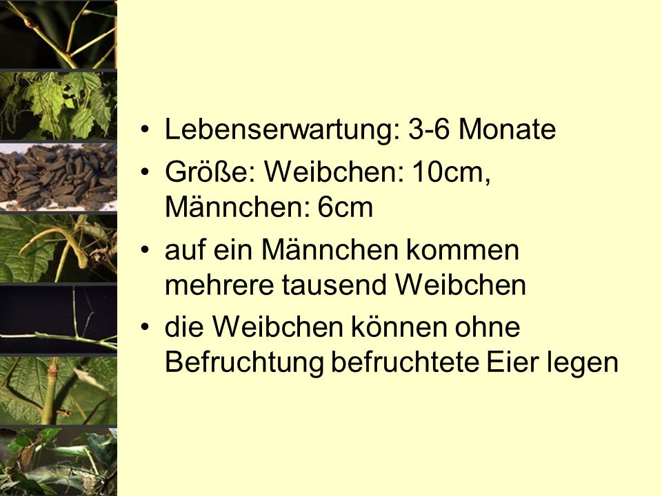 Lebenserwartung: 3-6 Monate