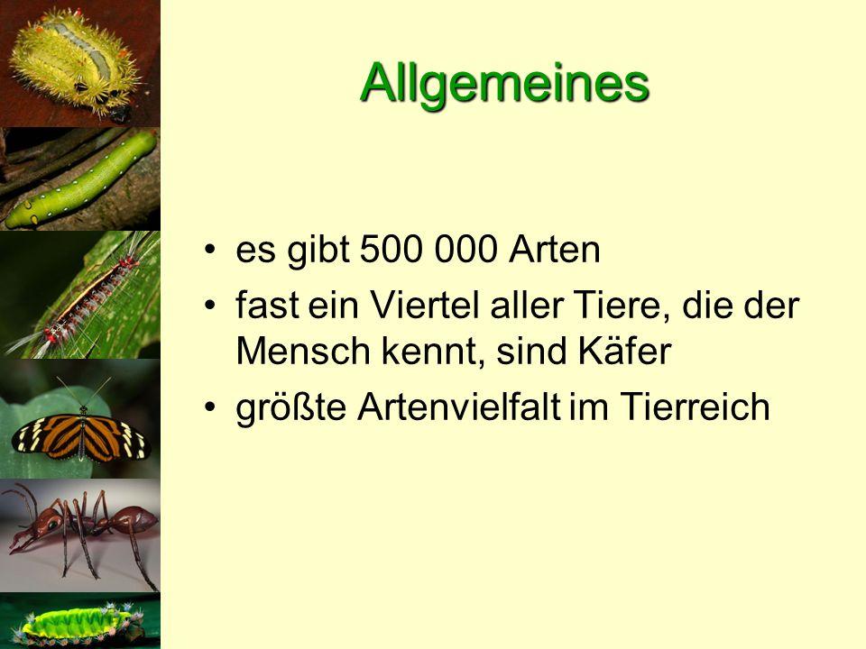 Allgemeines es gibt 500 000 Arten