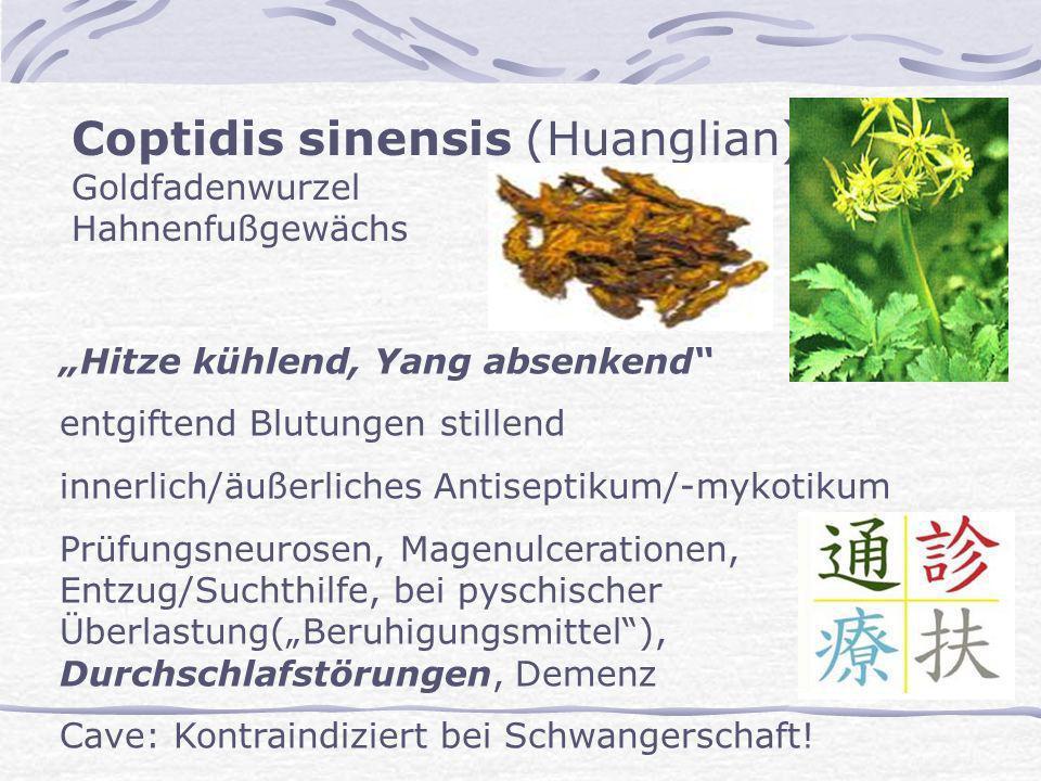 Coptidis sinensis (Huanglian) Goldfadenwurzel Hahnenfußgewächs