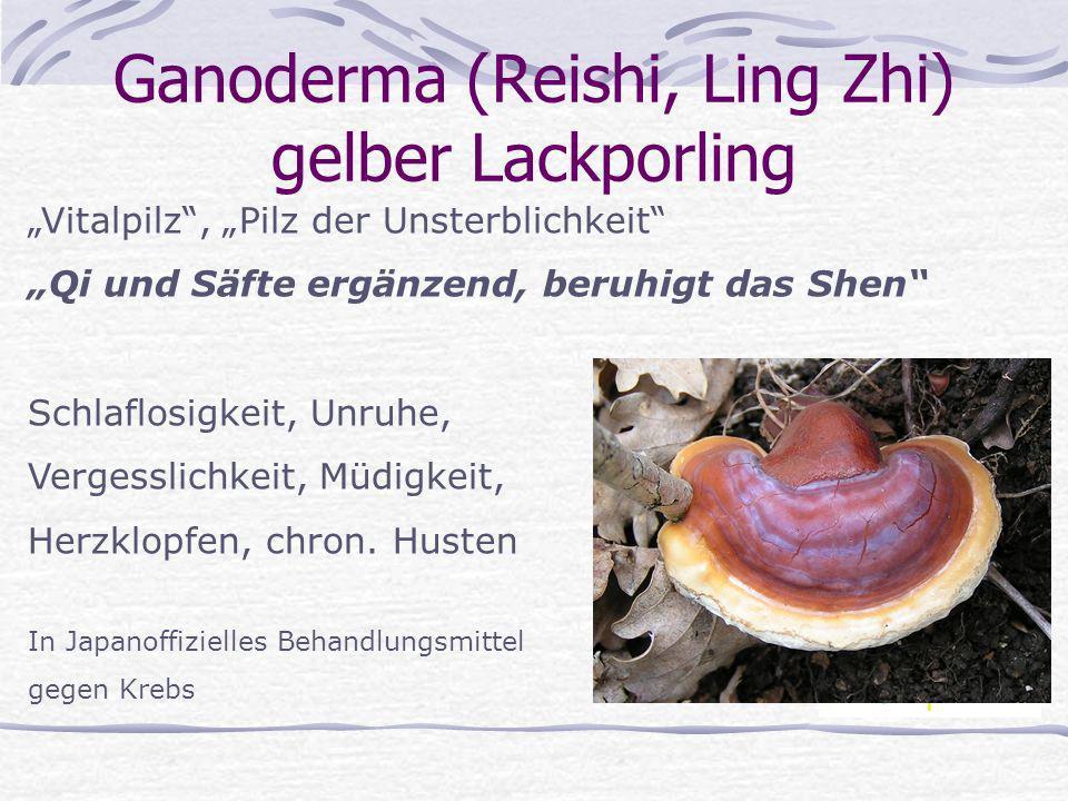 Ganoderma (Reishi, Ling Zhi) gelber Lackporling