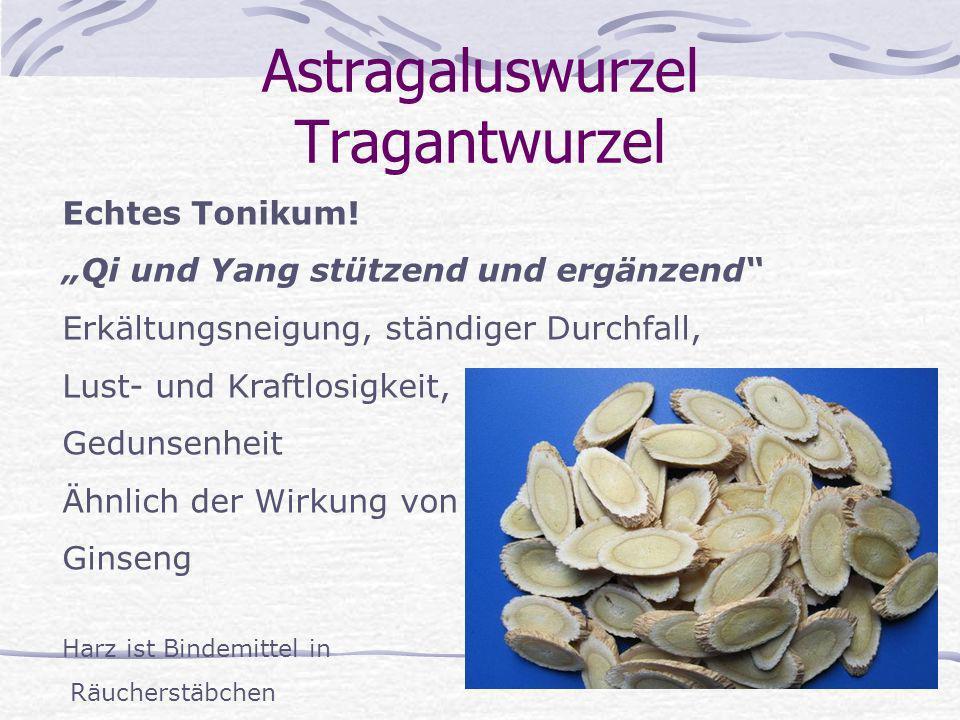 Astragaluswurzel Tragantwurzel