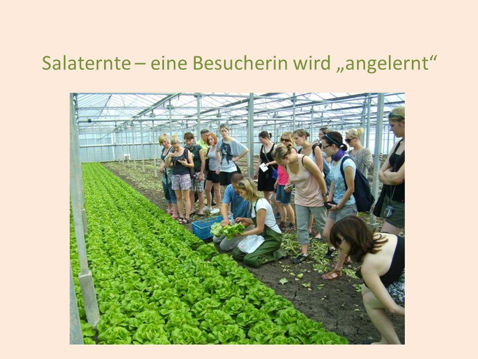 """Salaternte – eine Besucherin wird """"angelernt"""